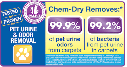 Pet Urine Removal Sarasota